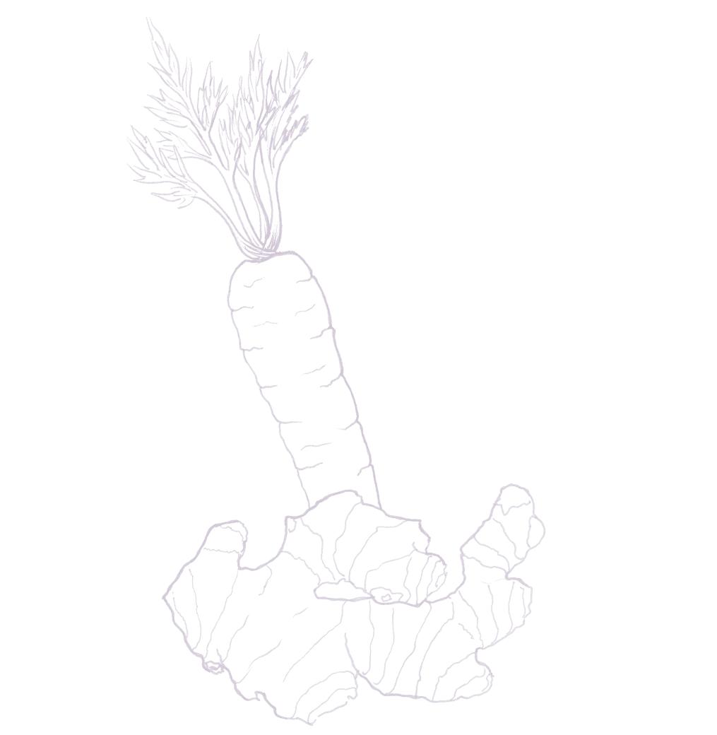 Kombucha carotte/gingembre